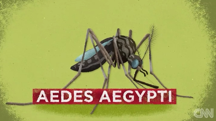 Aedes Egypt