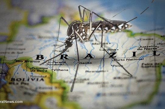 Mosquito-Map-of-Brazil